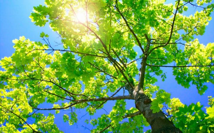 arbol-con-ramas-verdes_fondos-de-pantalla-de-arboles